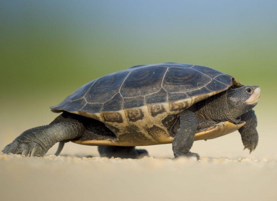 Pohádky snápovědou paralel: Želva (O krunýři)